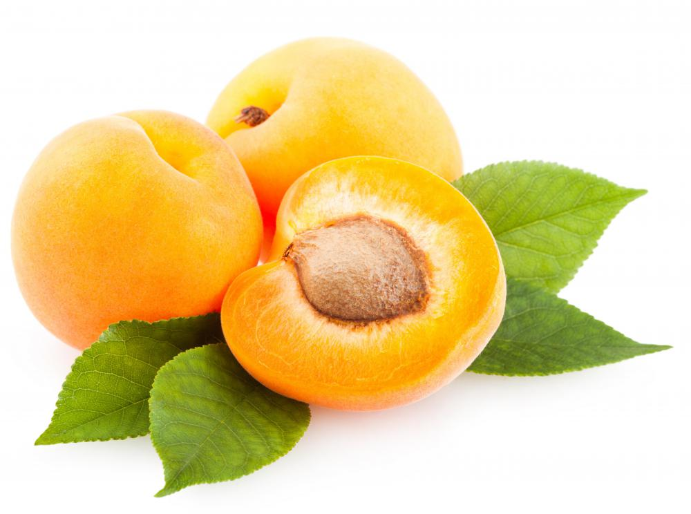 Apricots are a favorite orchard fruit.