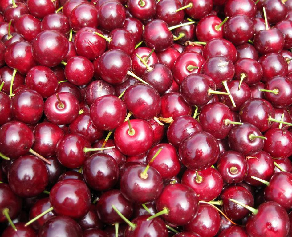 Cherries are often grown on orchards in the commercial farming of the fruits.