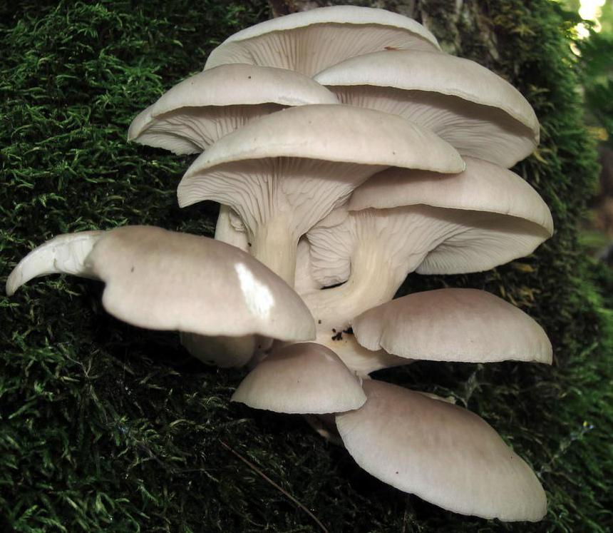 Fungi are one example of saprophytes, or living organisms that feed on dead, organic matter.