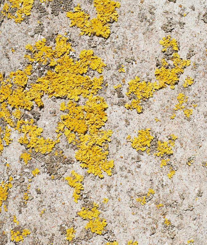 Yellow mold has a distinctive bright yellow color and most of it is toxic.
